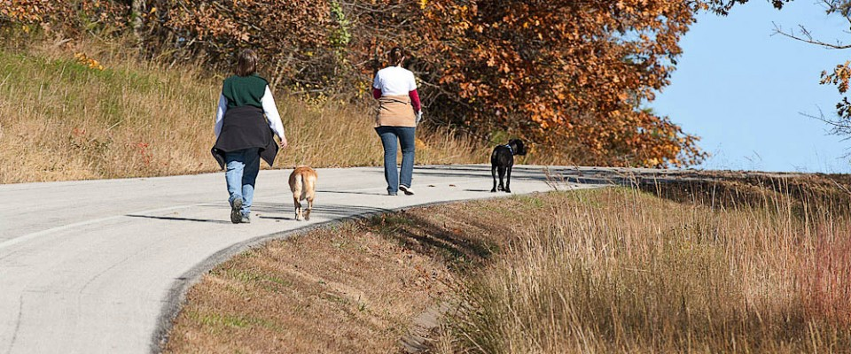 Wilson's Creek National Battlefield Dog Walkers